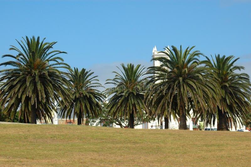 Stationnement avec des palmiers photographie stock