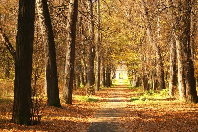 Stationnement d'automne. images stock