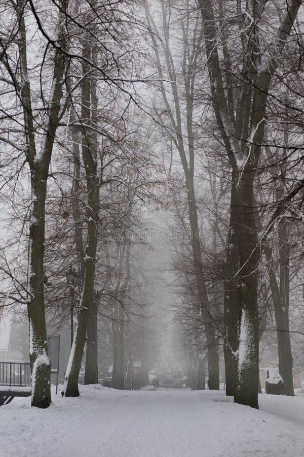 Stationnement dans l'horaire d'hiver Chemin en parc neigeux Arbres couverts de photo libre de droits