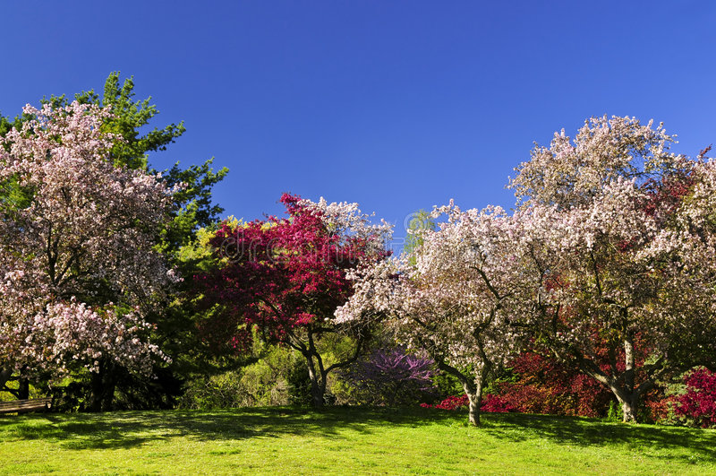 Stationnement de floraison d'arbres fruitiers au printemps photo stock