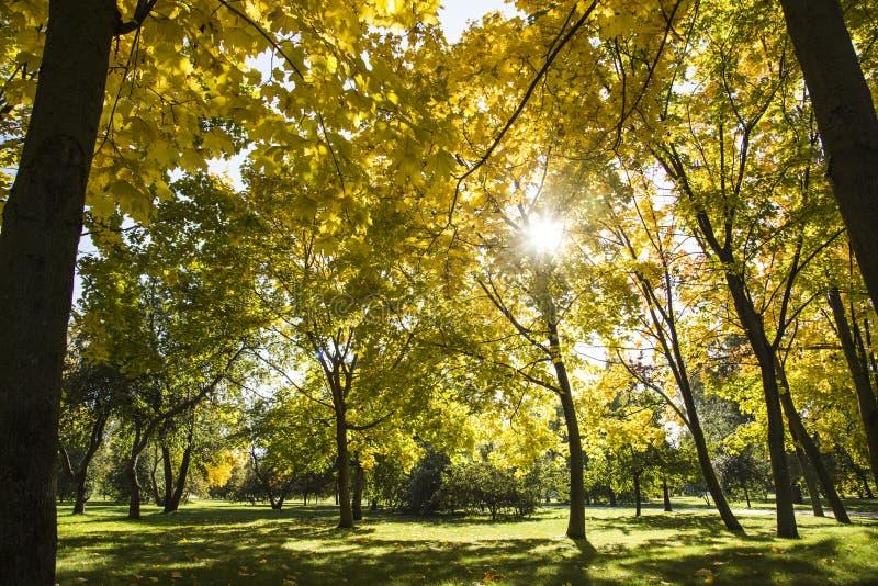stationnement de jour d'automne ensoleillé images libres de droits