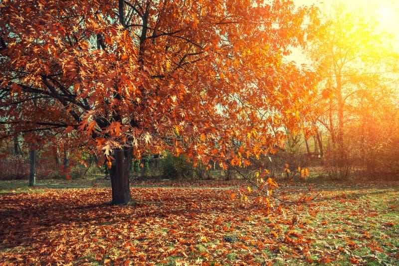 stationnement de jour d'automne ensoleillé photos stock