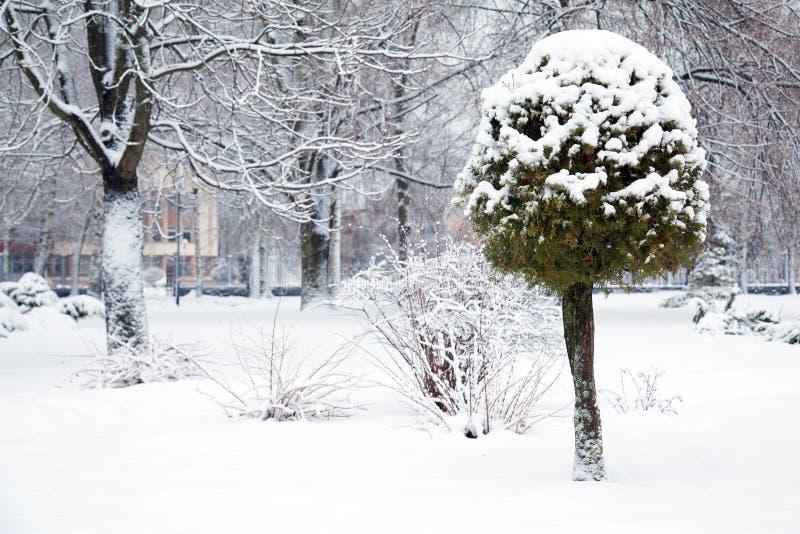 Stationnement de l'hiver photo stock