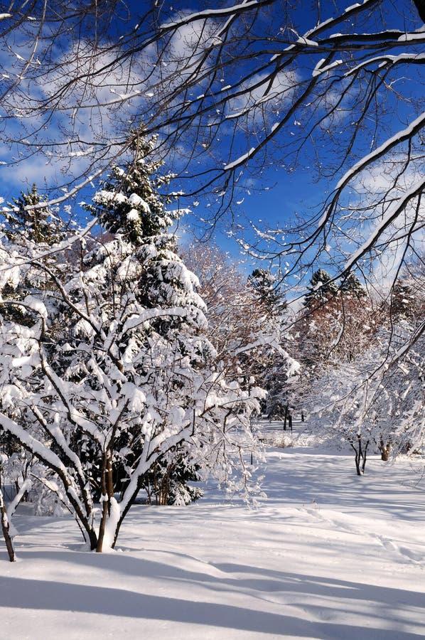 Download Stationnement de l'hiver photo stock. Image du paix, saison - 4350290