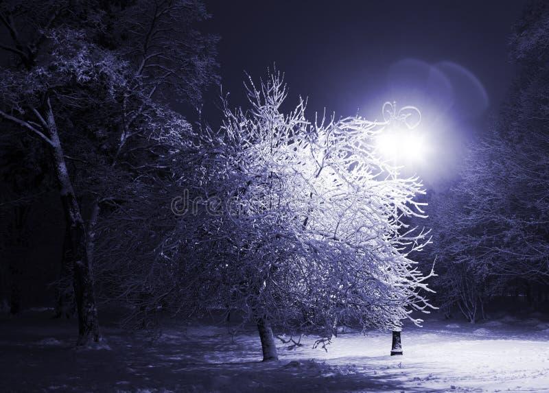 Stationnement de l'hiver la nuit image stock