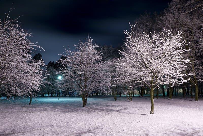 Stationnement de l'hiver la nuit photographie stock libre de droits