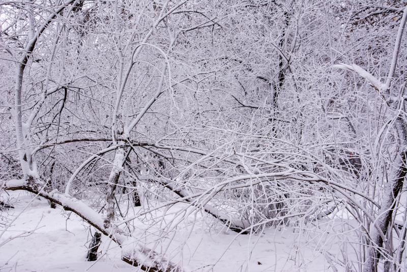 Stationnement de l'hiver ulyanovsk image libre de droits