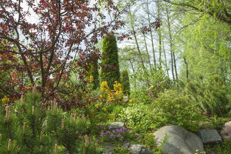 Stationnement de source Beaux arbres fleurissants et buissons en parc Jour ensoleillé images libres de droits