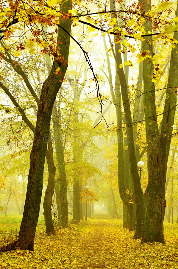 Stationnement en automne photos libres de droits