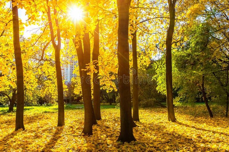 Download Stationnement Ensoleillé D'automne Image stock - Image du érable, outdoors: 45359699