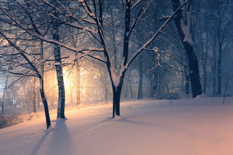 Stationnement et lumière de l'hiver derrière les arbres photographie stock libre de droits