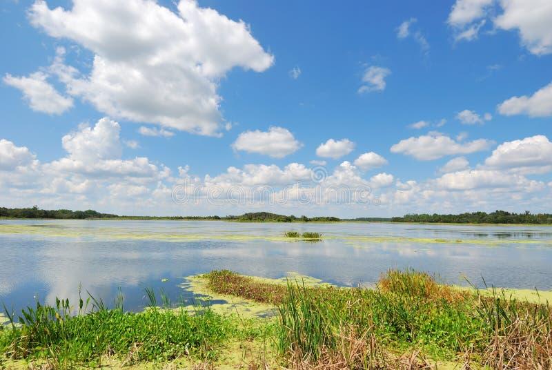 Stationnement fabriqué par l'homme #3 de zones humides d'Orlando de zones humides photos stock