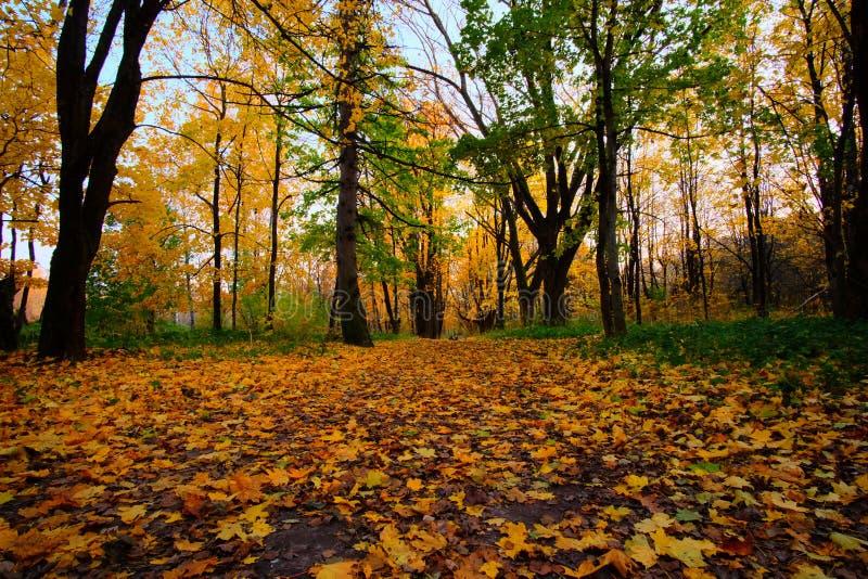 Stationnement gentil en automne image libre de droits