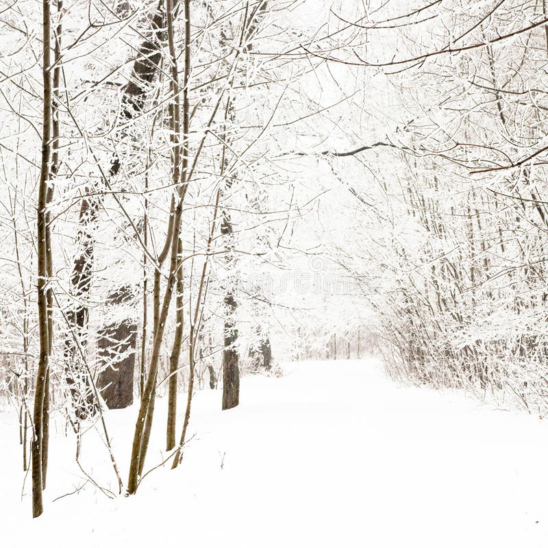 Stationnement gentil en hiver photo stock