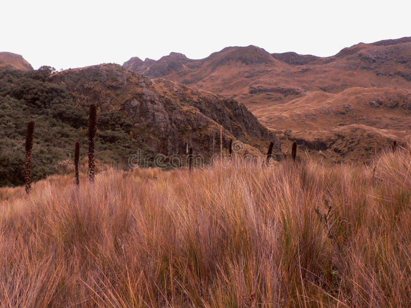 Stationnement national Cajas, Equateur photo libre de droits