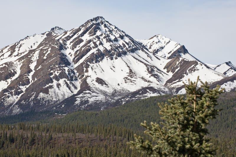 Stationnement national de Denali images libres de droits