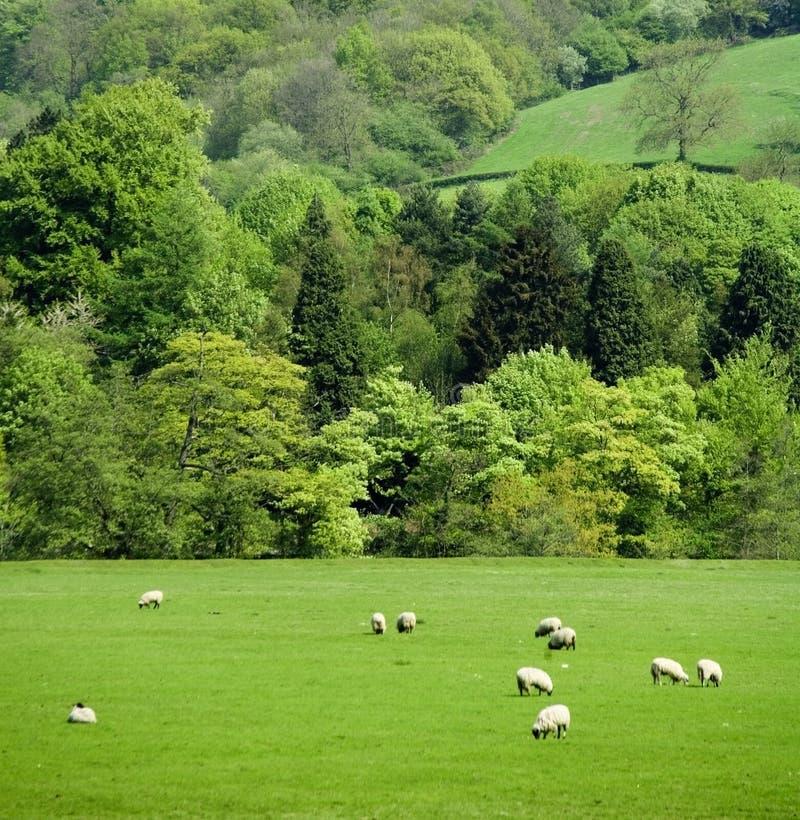 Stationnement national de district maximal de l'Angleterre Derbyshire images stock