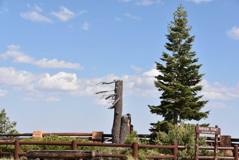 Stationnement national de gorge de Bryce en Utah photo libre de droits