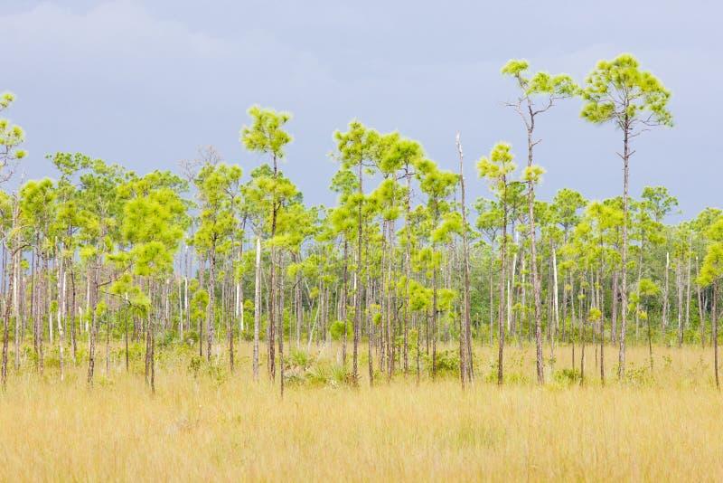 Stationnement national de marais image libre de droits