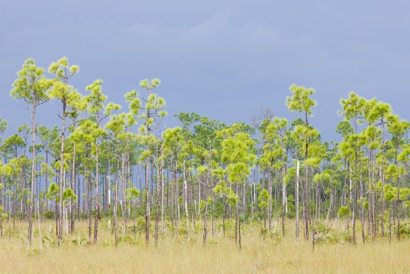 Stationnement national de marais images stock