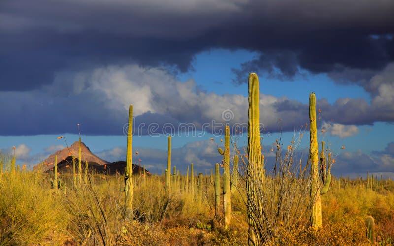 Stationnement national de Saguaro image stock