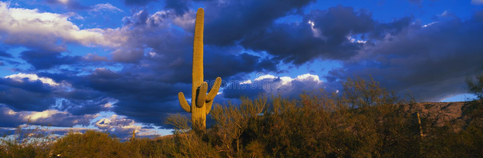 Stationnement national de Saguaro, Tucson, AZ images stock