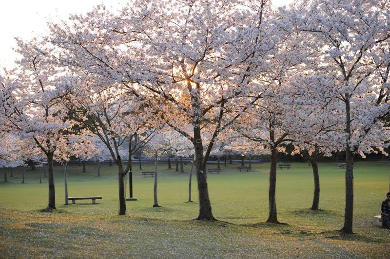 Stationnez à Nara, Japon, avec le banc vide image stock
