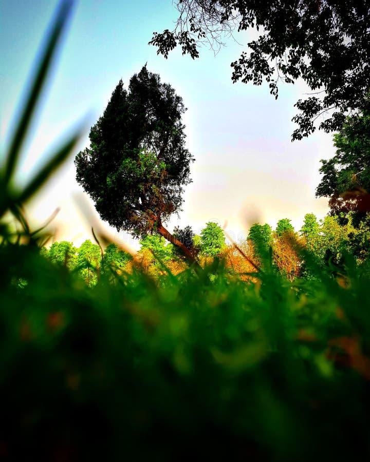 Stationnez les arbres photo stock