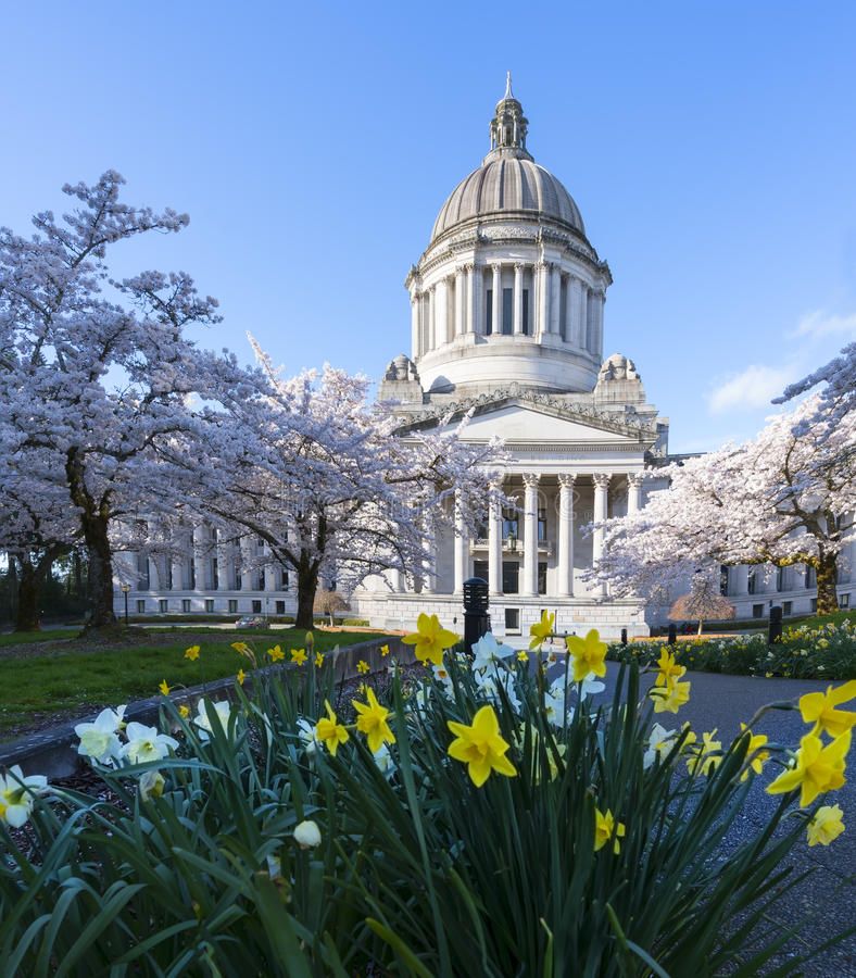 Stato del Washington Campidoglio in primavera fotografia stock
