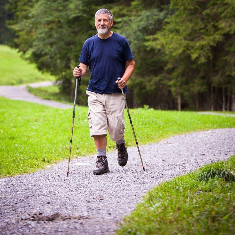stattliches nordisches Gehen des älteren Mannes stockfoto