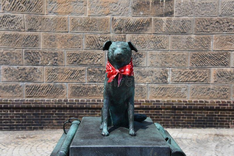 Statua del cane di Bunkou vicino al canale di Otaru immagini stock libere da diritti