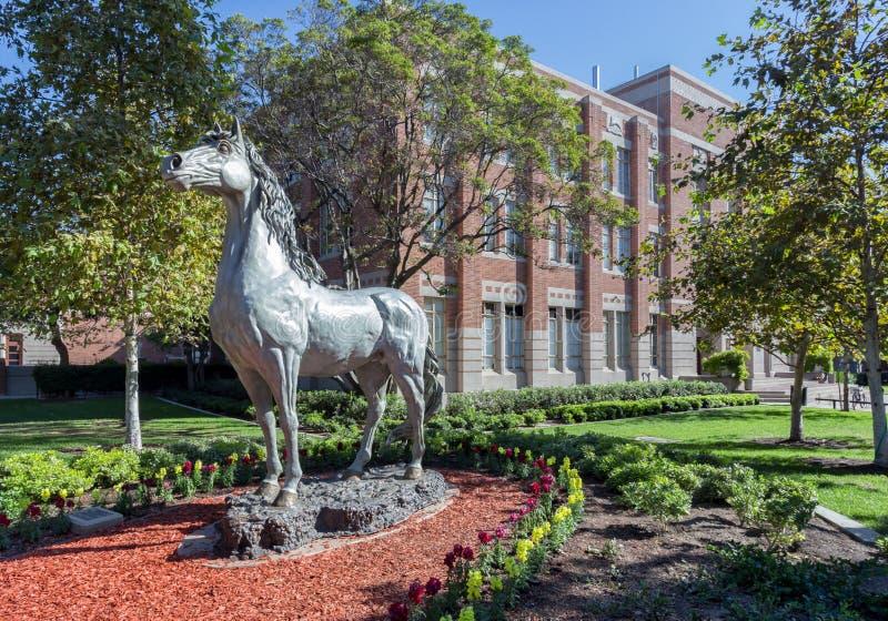 Statua del cavallo del viaggiatore dell'università della California del Sud fotografia stock