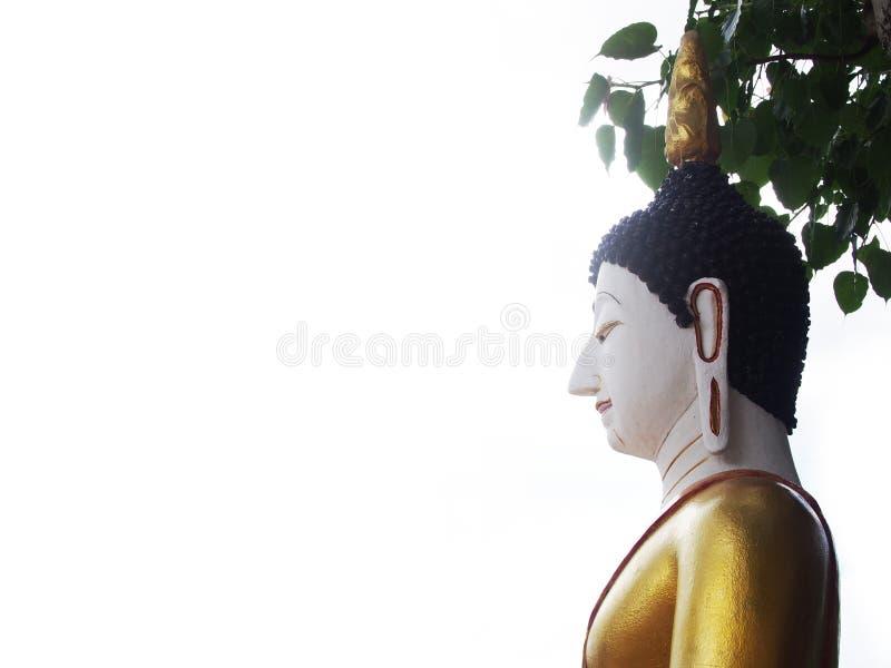 Statua di Buddha che si siede sotto l'albero di Bodhi con fondo luminoso bianco immagine stock libera da diritti