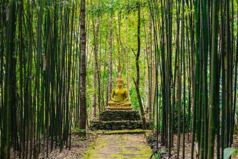 Statua di Buddha in foresta immagine stock