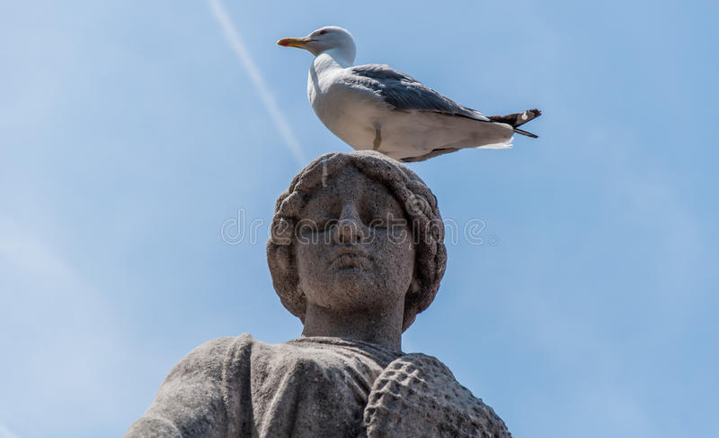 Statua i Seagull zdjęcia stock