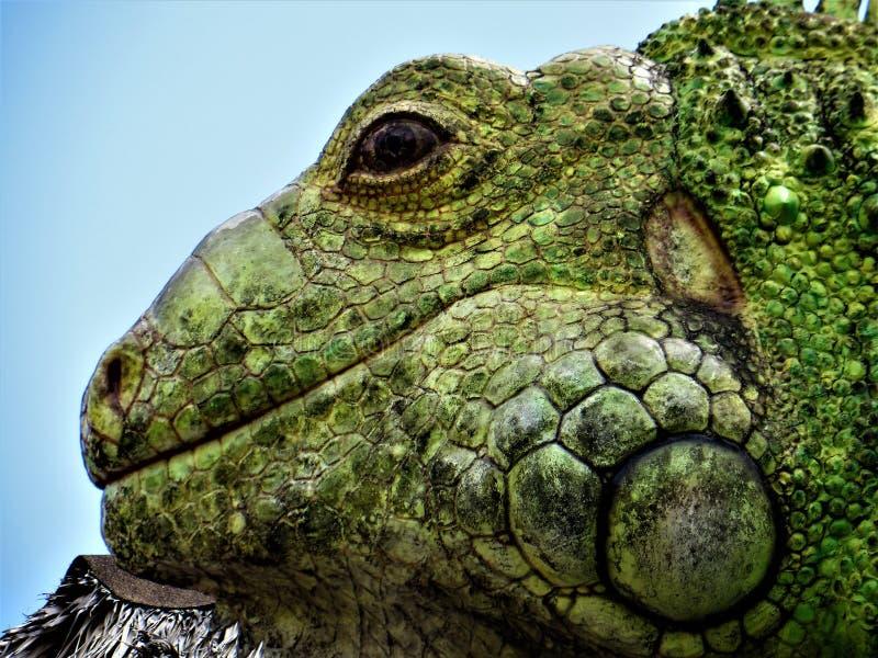 Statua iguana, Tampa, Floryda obraz royalty free