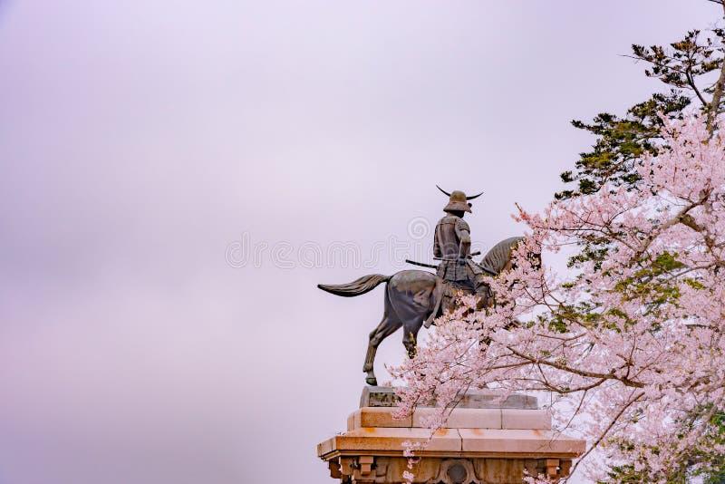Statua Masamune data na horseback wchodzić do Sendai kasztel w pełnego kwiatu czereśniowym okwitnięciu, Aobayama park, Sendai, Mi obraz royalty free