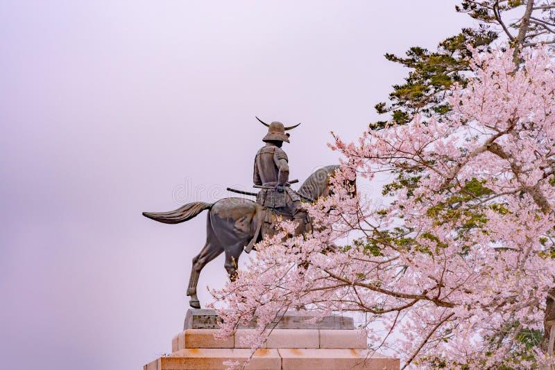 Statua Masamune data na horseback wchodzić do Sendai kasztel w pełnego kwiatu czereśniowym okwitnięciu, Aobayama park, Sendai, Mi fotografia stock