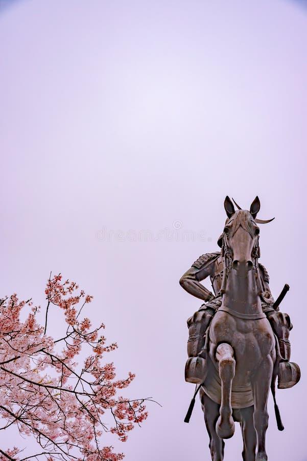 Statua Masamune data na horseback wchodzić do Sendai kasztel w pełnego kwiatu czereśniowym okwitnięciu, Aobayama park, Sendai, Mi obrazy royalty free