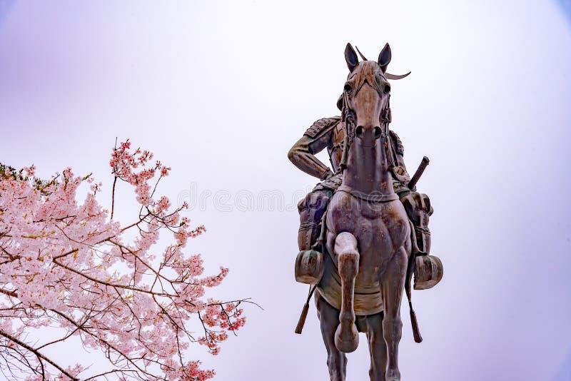 Statua Masamune data na horseback wchodzić do Sendai kasztel w pełnego kwiatu czereśniowym okwitnięciu, Aobayama park, Sendai, Mi obrazy stock
