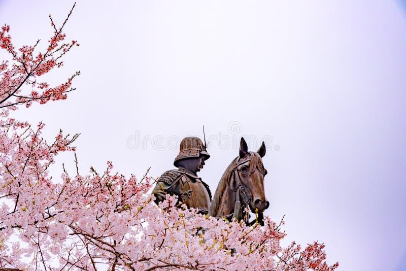 Statua Masamune data na horseback wchodzić do Sendai kasztel w pełnego kwiatu czereśniowym okwitnięciu, Aobayama park, Sendai, Mi fotografia royalty free