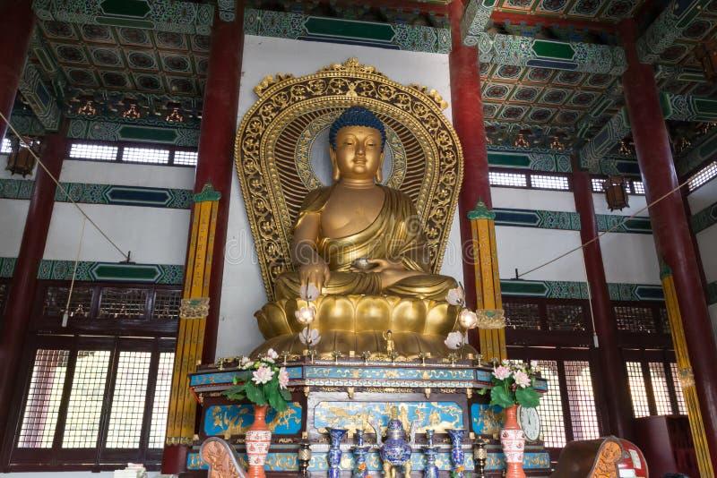 Statue de Bouddha à l'intérieur de temple chinois dans Lumbini, Népal photo libre de droits
