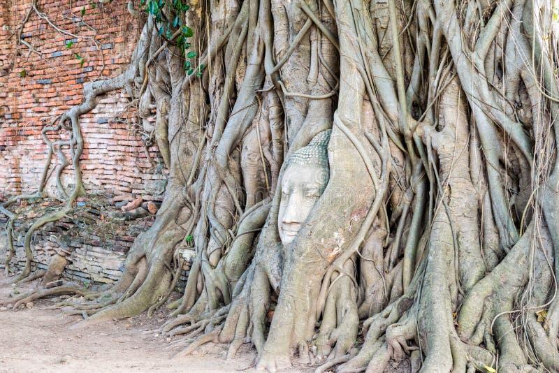 Statue de Bouddha de tête dans l'arbre de racines photographie stock