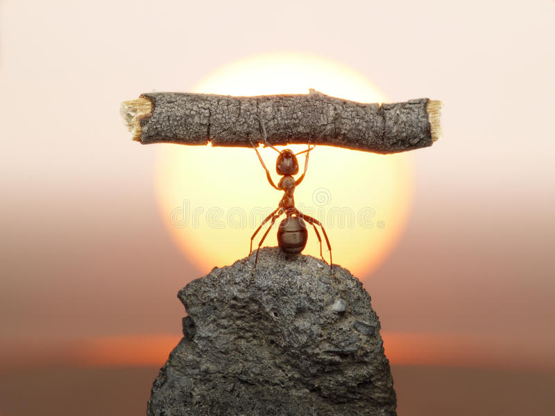 Statue de travail, civilisation de fourmis photo stock