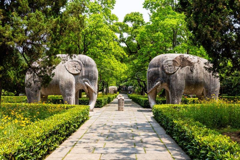 Statue dell'elefante nel modo sacro in Ming Xiaoling Mausoleum, individuato sul supporto Zijin, provincia di Nanchino, Jiangsu, C fotografia stock
