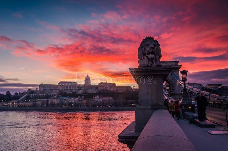 Statue des Löwes an der Hängebrücke, Budapest, Ungarn stockfotografie