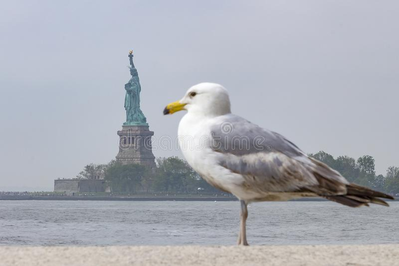 The statue of liberty in New York seems quite small by this Seagull, United States stock photo