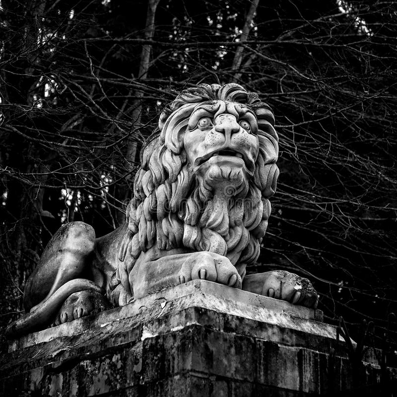 Statue of a powerful lion. Statue of a powerful laying lion in black and white square stock photography