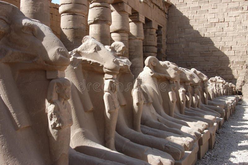 Statuen in Luxor stockfotos