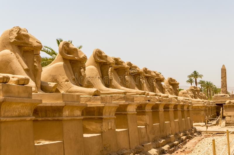 Statues in the Alley of the Ram Headed Sphinxes at the Temple of Karnak in Luxor, Egypt. The famous avenue of ram-headed sphinxes that lead to the first pylon of stock photography